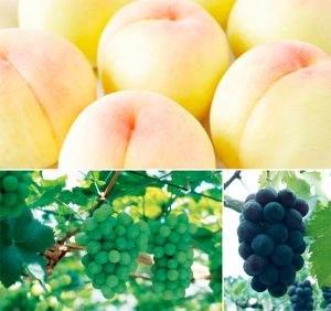 local-fruit_img1